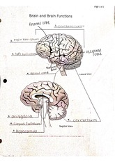 Brain and Brain Functions Activity