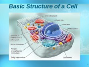 cell structure bio 102