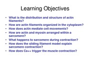 BIOS303_lecture 24_actin filaments and muscle contraction