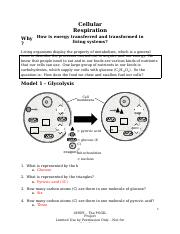 Cell Respiration Pogil 2.docx - Cellular Respiration Why ...