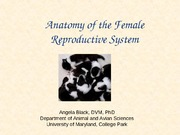 Lecture 22 and 23 Female Reproductive Anatomy-1