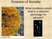 Ch 18 Evolution of Sociality