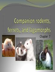 Ch._7_rodents_ferrets_and_lagomorphs_part_1.ppt