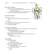 Lecture 7- Knee Structure & Functional Anatomy