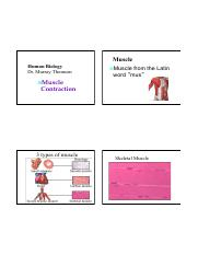 Lecture 5 Muscular System (MT).pdf