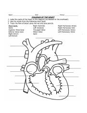 Heart Diagram Student Worksheet Superior Vena Cava 3 Inferior Vena Cava 4 Right Atrium 5 Left Atrium 6 Right Ventricle 7 Left Ventricle 8 Tricuspid Course Hero