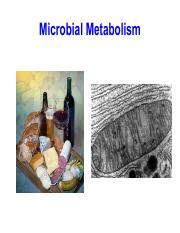 Lecture 7 - Microbial Metabolism (1).pdf