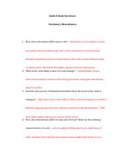 Circulatory Disturbances Questions.docx