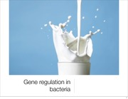 L17 Gene regulation in bacteria