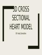 3D cross sectional heart model
