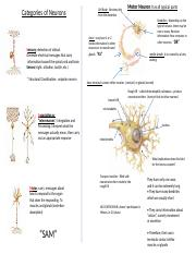 Anatomy: Nervous System Refresher