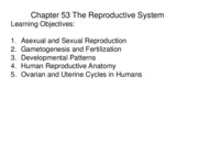 Chapter 53 The Reproductive System 2011