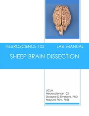 Lab 1 Sheep Brain Dissection