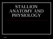 STALLION ANATOMY AND PHYSIOLOGY