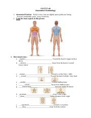 Anatomical Terminology WS.doc