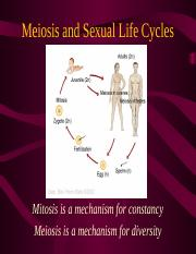 08_2010_Meiosis_and_Sexual_Life_Cycles.ppt