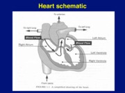 Artificial Heart and assist(4)