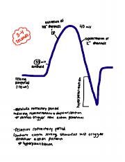 Action Potential .pdf