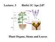 3 Organs - Development, Stems