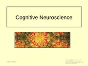 lecture 2 - cognitive neuroscience