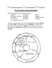 Cell Worksheet Answers.pdf - Name Date Period The Cell Cycle ...