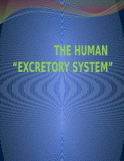 THE HUMAN.pptx