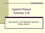 Anatomy Lab Lecture 6KB