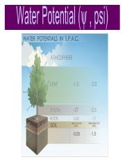 Water_Potential_Practice.pptx