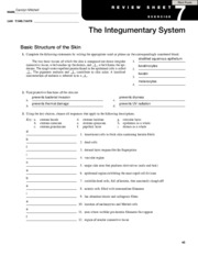 the integumentary system chapter 7 review sheet • integumentary system – consists of the skin and its accessory organs – hair, nails, and cutaneous glands chapter 7 the integumentary system author.