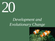 Ch20 Lecture-Development and Evolutionary Change