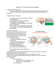Anatomy Ch 13 Notes