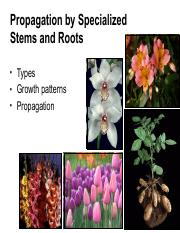 15+Specialized+stems+and+roots.pdf