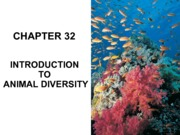 Chapter 32 - Intro to Animal Diversity