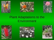 Plant Adaptations to the Environment '06
