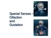 Special Senses -Olfaction and Taste