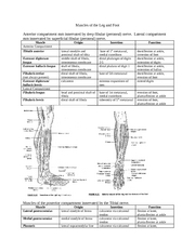 Muscles of the Leg and Foot_1