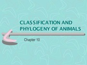 Chapter 10 - Classification and Phylogeny of Animals - Notes