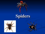 Y39-Spiders -2