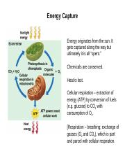 Lecture 22 - Cell Resp I - Glycolysis & TCA.pptx