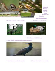 Bird pics for Visual ID Quiz with Names study guide LAB 1
