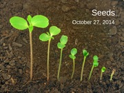 Oct 27 - Seeds and Water Chemistry (1)
