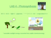 LAB 4 - Photosynthesis
