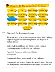 Chapter 42 The respiratory System