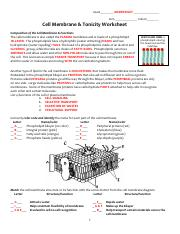 KEY cell membrane and tonicity worksheet - NAME_ ANSWER KEY _ ...