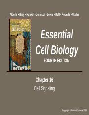 Cell Mol Biology Chapter 16 Summer 2017