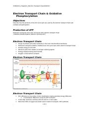 CHEM115_Chapter14_Electron Transport Chain.doc