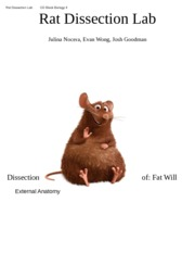 Worksheets Rat Dissection Worksheet rat dissection lab cd block biology 4 lab
