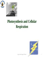 CHAPTER 4 - PHOTOSYNTHESIS AND CELLULAR RESPIRATION