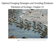 Lecture 17-Optimal foraging (1)
