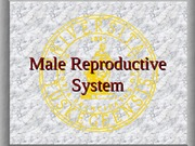 Male Reproductive System, Blackboard images, Hari